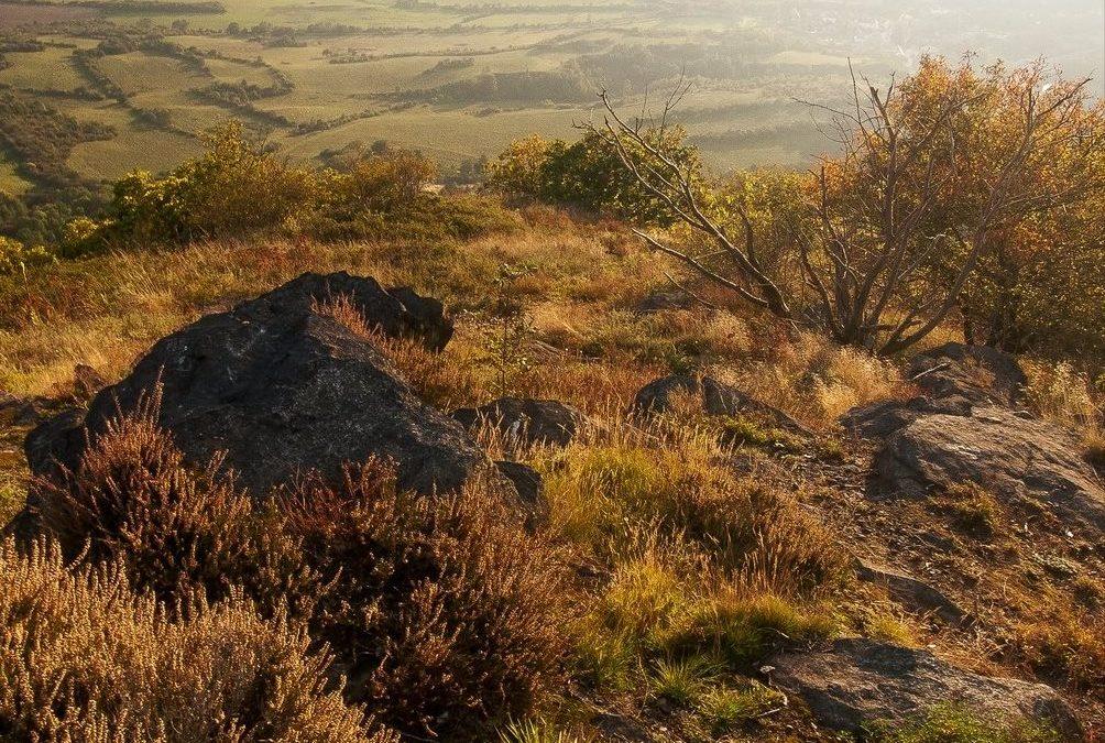 Květena přírodní rezervace Bořeň